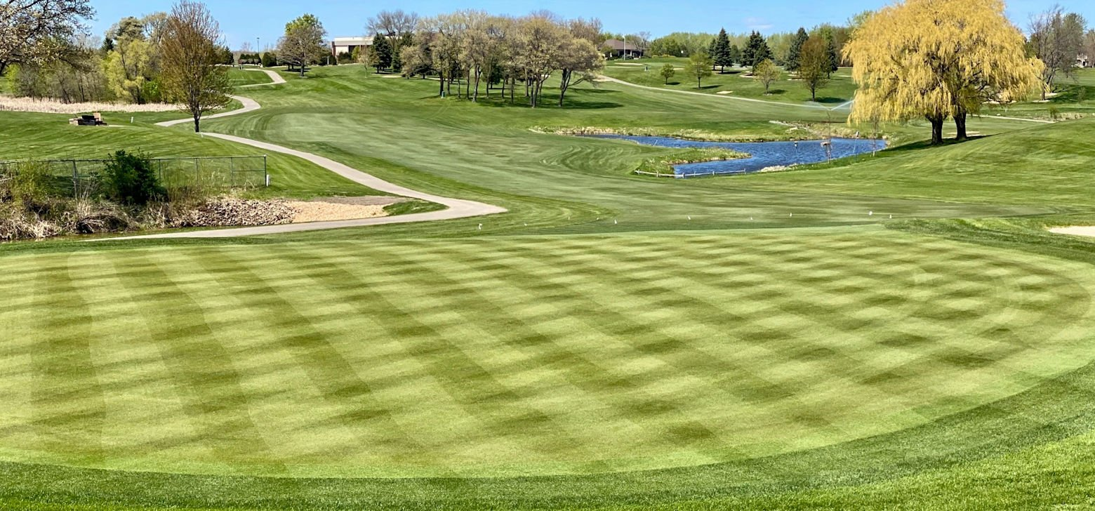 New 007 bent grass sod on the greens with a striped mowing pattern