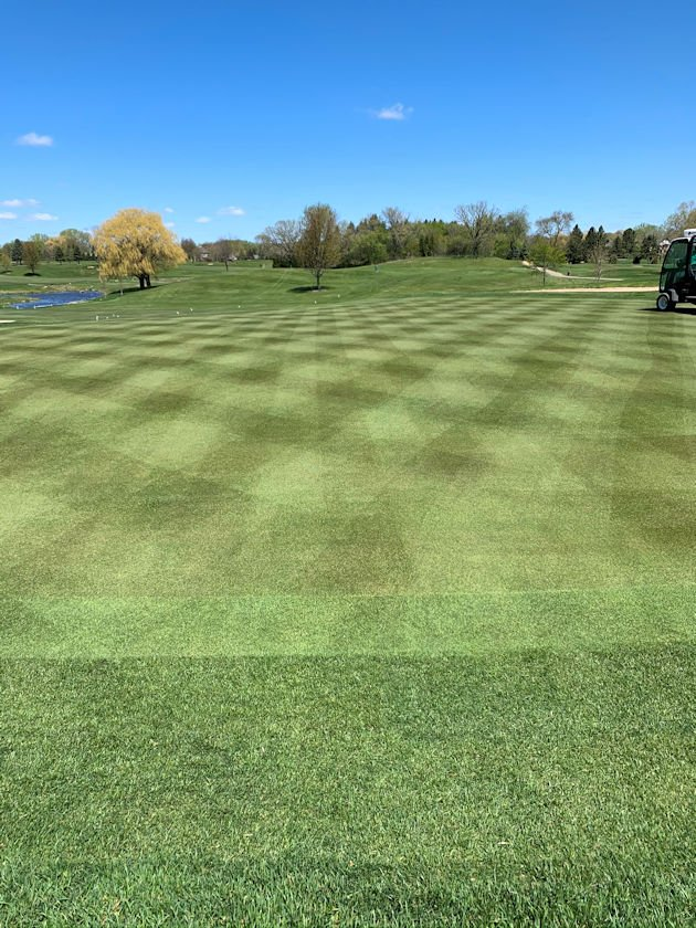 New low-mow bluegrass sod installation with a striped mowing pattern